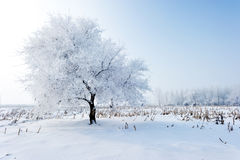 Trees in frost and landscape Stock Photos