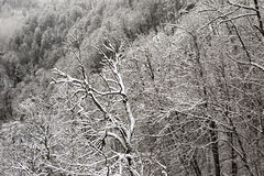 Trees in the frost on mountainside Stock Photos