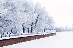 Trees in frost and Neva River Stock Image