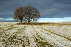 Trees in frozen field. Scenic view of two trees in middle of frozen field, winter scene Royalty Free Stock Photo