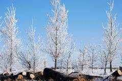Trees Frozen Fog Royalty Free Stock Images