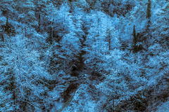 When the trees are frozen. By frost the night before royalty free stock image