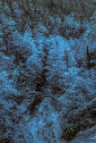 When the trees are frozen. By frost the night before royalty free stock photography