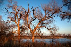 Trees and frozen lake Stock Photography
