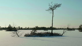 Trees on the frozen lake. Clean and frosty daytime. Smooth dolly shot.  stock video