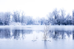 Trees in a frozen lake Royalty Free Stock Photography