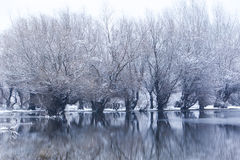 Trees in a frozen lake Royalty Free Stock Photos