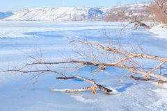 Trees in the frozen lake Stock Photo