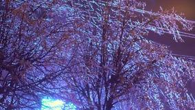 Trees in an Frozen rain. 4K stock video footage
