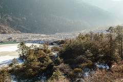 Trees and frozen river with ice and water in sideway that on the way to Zero Point at Lachung in winter. North Sikkim, India.  Royalty Free Stock Photo