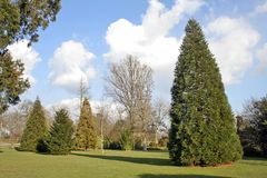 Trees and garden. Wakehurst PLace, Sussex royalty free stock image