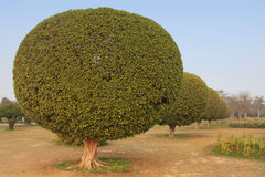 Trees in a garden around Lotus Temple, New Delhi Stock Image