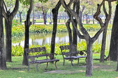 Trees garden. Are so beautiful Royalty Free Stock Photography