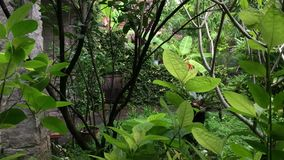Trees at the garden. In Chiang Mai, northern Thailand stock video footage