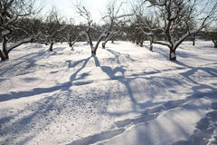 Trees in the garden covered with snow Stock Images