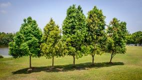 Trees in the garden, myanmar Stock Image