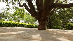 Trees in the Garden and park.  stock video footage