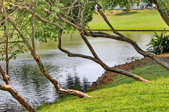 Trees garden. Trees use to dressing garden Royalty Free Stock Photography