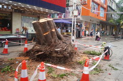 The trees in the garden workers handling typhoon toppled stock photos