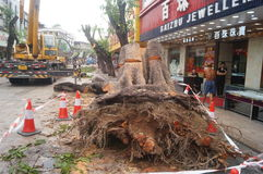 The trees in the garden workers handling typhoon toppled stock image