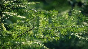 Trees In Gentle Breeze On Sunny Day. Closeup of tree branches moving in the breeze in the sunlight stock video footage