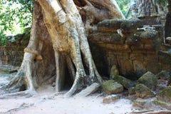 Trees germinating through walls Royalty Free Stock Photo