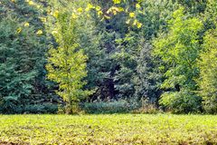 Trees on a glade in the autumn wood royalty free stock photography