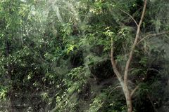 Trees through the glass window. Royalty Free Stock Images