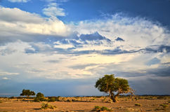 Trees Gobi desert Royalty Free Stock Images