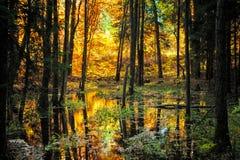 Typical Golden Autumn Scene stock photos
