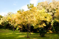 Trees with golden leaves and green grass land Royalty Free Stock Photos