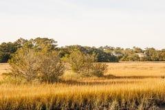Trees in Golden Wetland Marsh. Bare trees in golden grass of a coastal wetland marsh Stock Photos