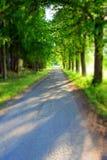 Trees gränd Arkivbild