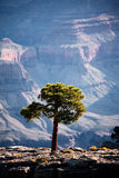 Trees in the Grand Canyon Stock Image