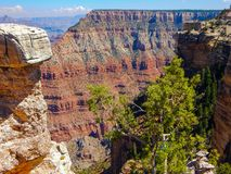 Trees in the Grand Canyon. This amazing photo of Grand Canyon was taken in Arizona stock image