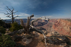 Trees at the Grand Canyon Royalty Free Stock Photos