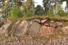 A forest on a rock. Trees on a granite rock Stock Images