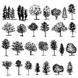 Trees graphic hand drawn vector engraving doodle sketch  Stock Photo