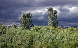 Trees and grass. Bendings under act of high wind on a background a storm sky stock photo