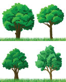 Trees and grass. Green trees and grass set Stock Photos