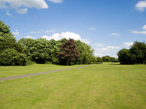 Trees and grass Royalty Free Stock Images