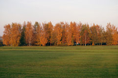 Trees and grass in autumn Stock Image