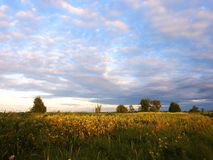 Trees, grass and beautiful cloudy sky, Lithuania Stock Photos