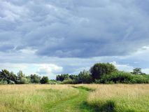 Trees, grass and beautiful cloudy sky, Lithuania Stock Images