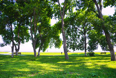 Trees, grass and benches for resting Stock Images