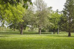 Trees and grass in a city park royalty free stock image