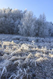 Trees and grass covered with frost Stock Photo
