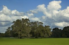 Trees in Grass Field. Trees in a grass field with beautiful cloudscape Stock Image