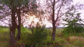 Trees grass field beautiful landscape at sunset. movement nature trees in the field. Trees grass field beautiful landscape at sunset. movement nature trees in stock video