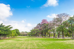 Trees and grass field with blue sky Stock Photo